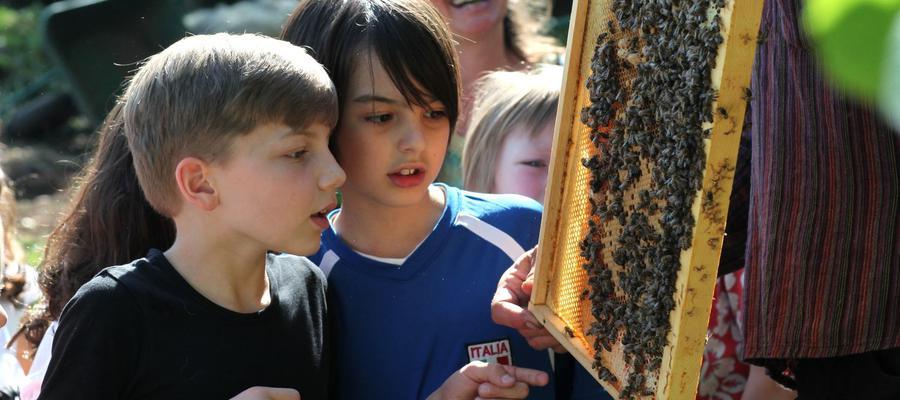 An jeder Schule ein Bienenvolk